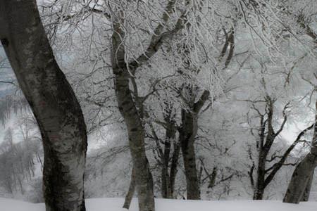 雪洞キャンプ