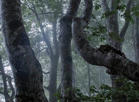 NO.1  豪雨災害と森林のこと