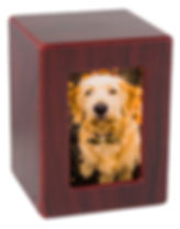 photobox_cherry_dogA.jpg