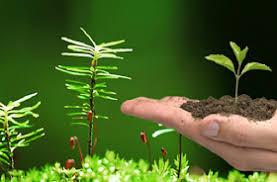 Estratégia em Economia Verde