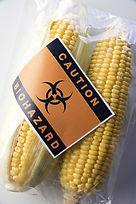 GM corn 62602408.jpg