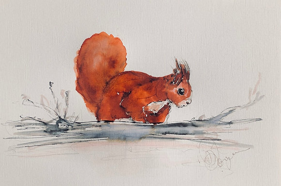 Red Squirrel For Sale