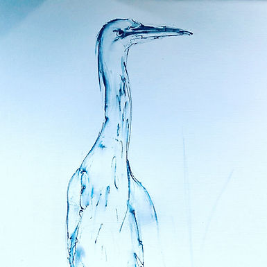 Grey Heron For Sale  (mounted and framed)