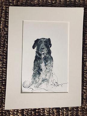 Cooper (commission) Sara