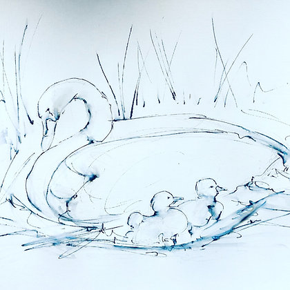 Swan and Signets For Sale  (mounted and framed)