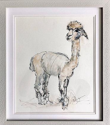 Alpaca For Sale Framed