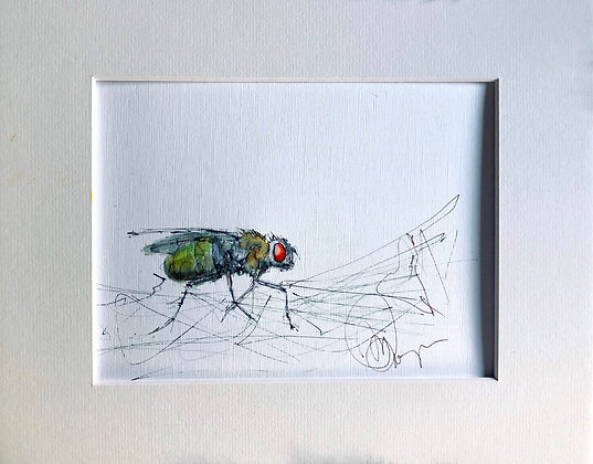 U.K. Fly Drawing For Sale