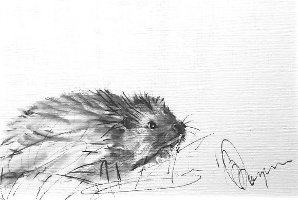 Study of hedgehogs 1