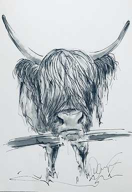 Cows of Minch For Sale  A5 size Print