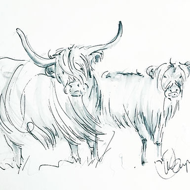 Cows from the Common  A5 size Print