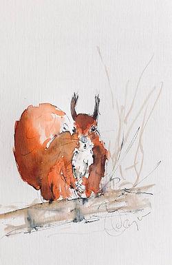 Red Squirrel For Sale Framed