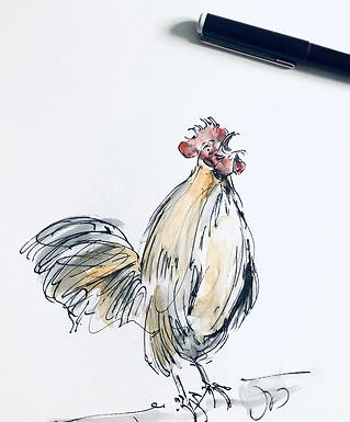 Rooster Original Artwork For Sale Framed