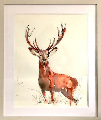 STAG FOR SALE  ORIGINAL