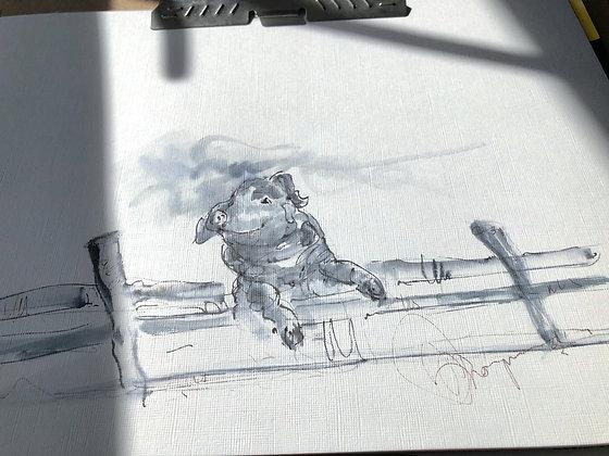 Pig in isolation Framed