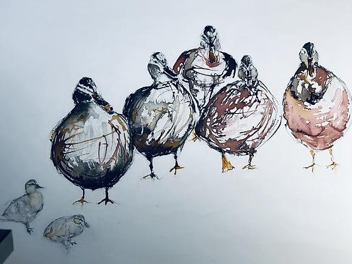 Original Ducks For Sale