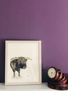 Highland Bull For Sale