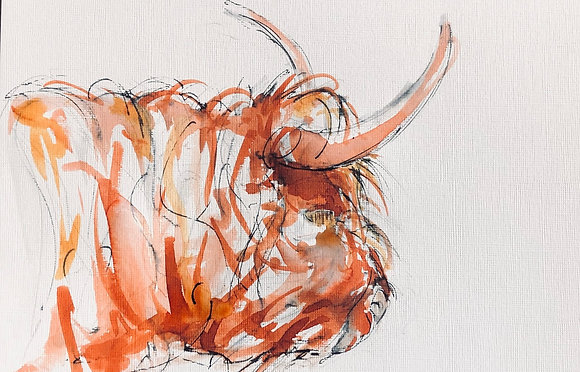 Highland Cow For Sale (2)