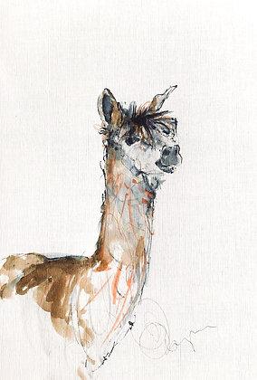 Alpaca for sale (01) Framed