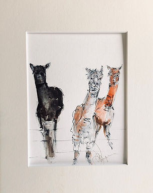 Llamas  Drawing For Sale