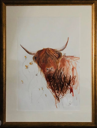 Highland Cow For Sale with Mortimer 2
