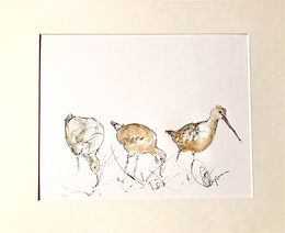 Bar Tailed Godwit - Original Drawing For Sale
