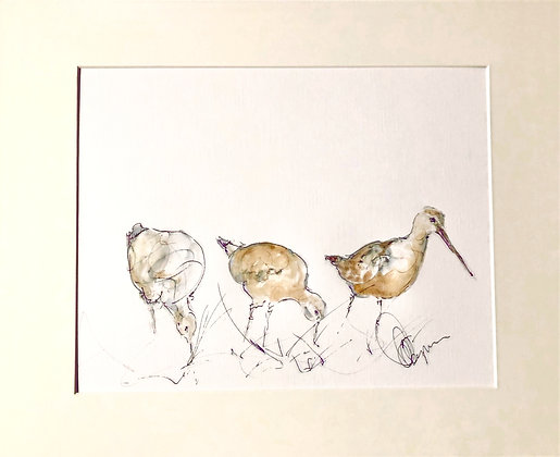 Bar Tailed Godwit - Original Drawing For Sale