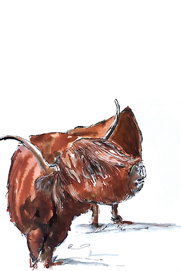 Original Highlsnd Cow For Sale (mounted and framed)