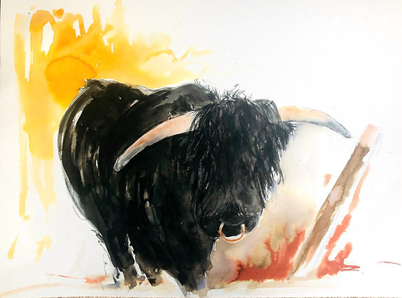 Highland Bull For Sale Black Prince