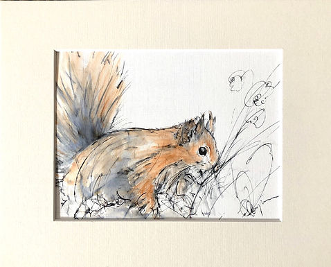 Red Squirrel 2   Drawing For Sale