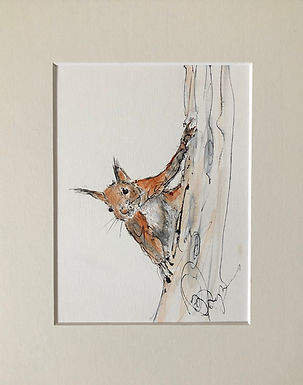 Red Squirrel  | Drawing For Sale
