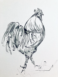 B/W Rooster For Sale Original