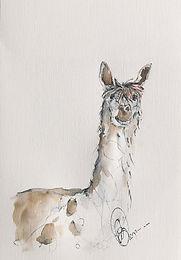 Alpaca for sale (02)  framed