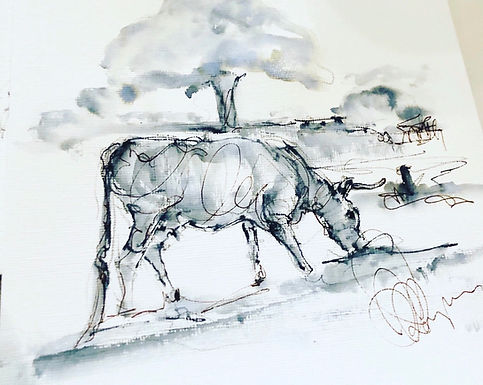 Cows of Minchinhampton