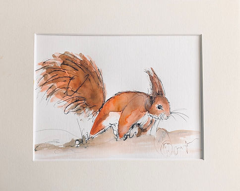 Red Squirrel Drawing For Sale