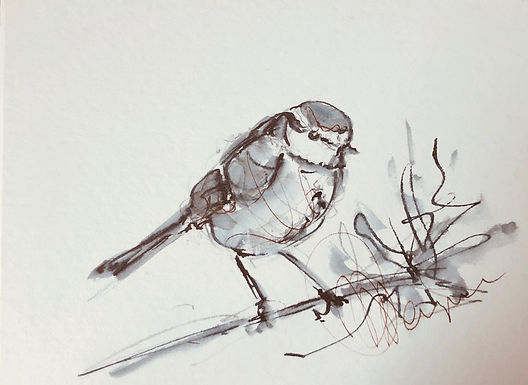 Blue Tit - Original Drawing