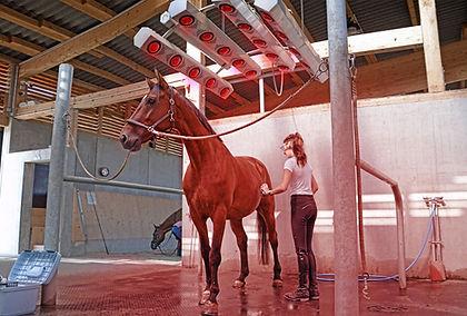 Pferde-Pflege-Vorschau