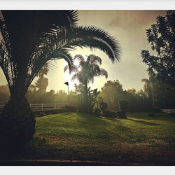 Morning Glory ❤️ Happy Wednesday 🌴 #swedeequine #horse #ranch #sunny #california #morning #sunrise