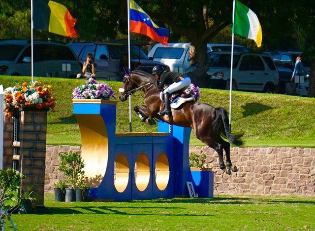 Cilandro doing his thing _) #swedeequine #horsesofinstagram #showjumping #horsesforsale #grandprixju