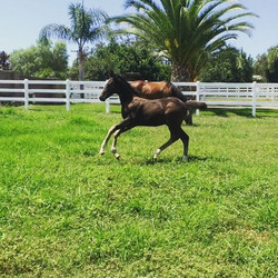 Happy Monday!! Hope you are having as much fun as this little filly _) #foalsofinstagram #specialhor