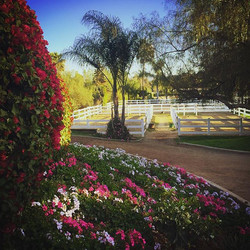 Love the flowers and palm trees at our ranch! #beautiful #colorful #california #ranch #horses #stabl