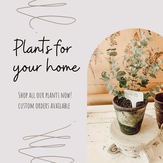 My Plants Social Media Post (1).png