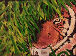 Bingal Tiger