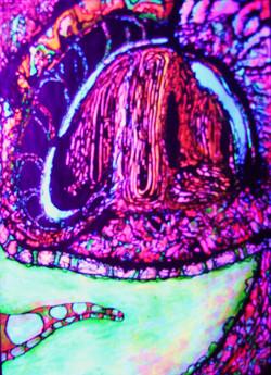 Neon Salamander