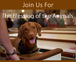 Blessing of Animals.png