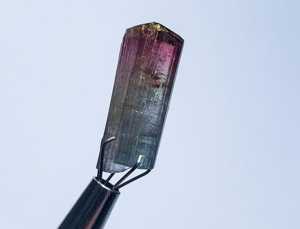 Multicolor Virgem de Lampa Tourmaline. 1.99 Grams.