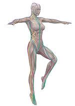 AnatomyTrains(1).jpg