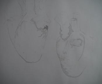 Leonardo da Vinci's Cardiovascular Research Study