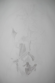 The cardiovascular system and principal organs of a woman Study (Leonardo Da Vinci)