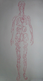 Cardiovascular System II