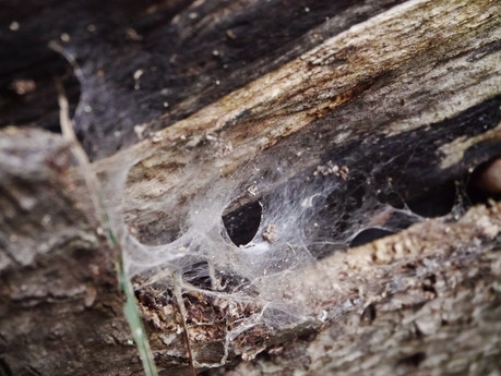 Spider's Home